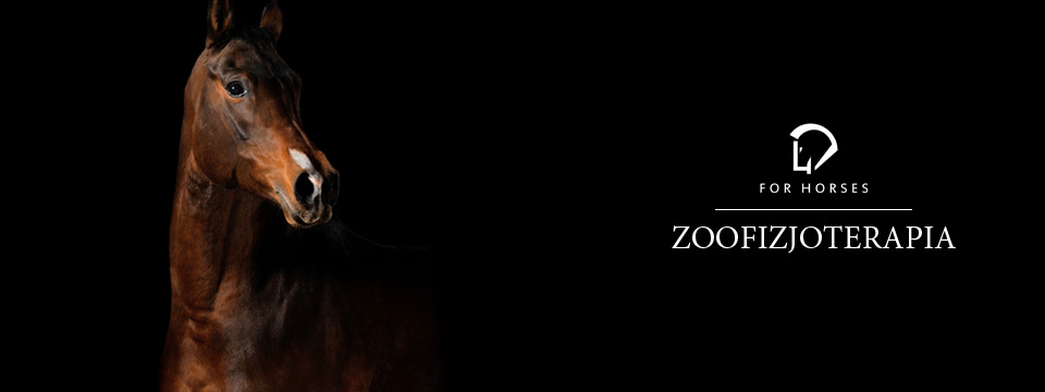 Zoofizjoterapia